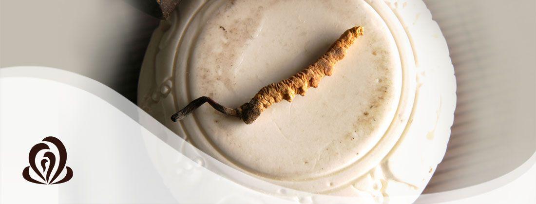 Vorschaubild: Cordyceps Vitalpilz 60 Kapseln