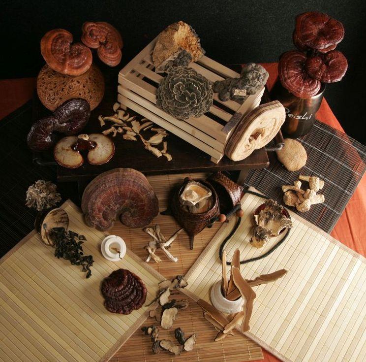 Vitalpilzkunde-Kombination verschiedener Pilzarten - Terra Mundo